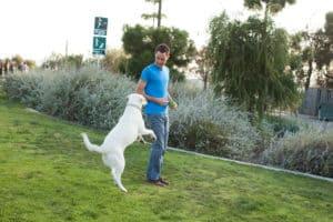 best dog trainer