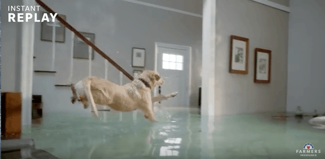 The Flooded House Dog Diving Competition