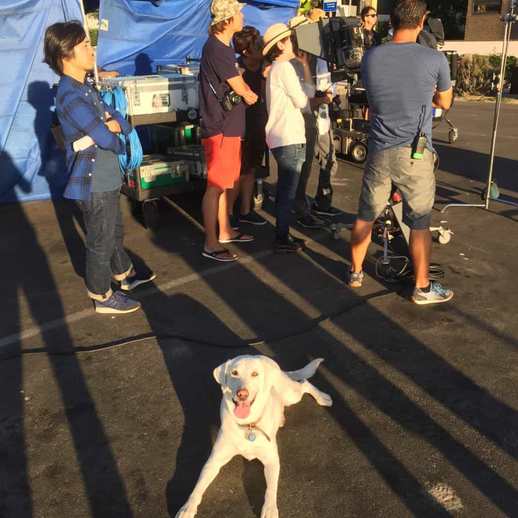set-dogs-for-tv