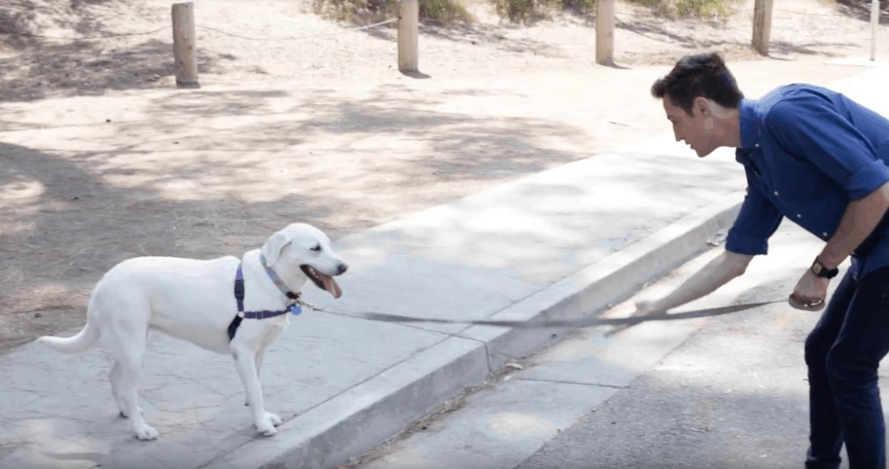 street-safe-dog
