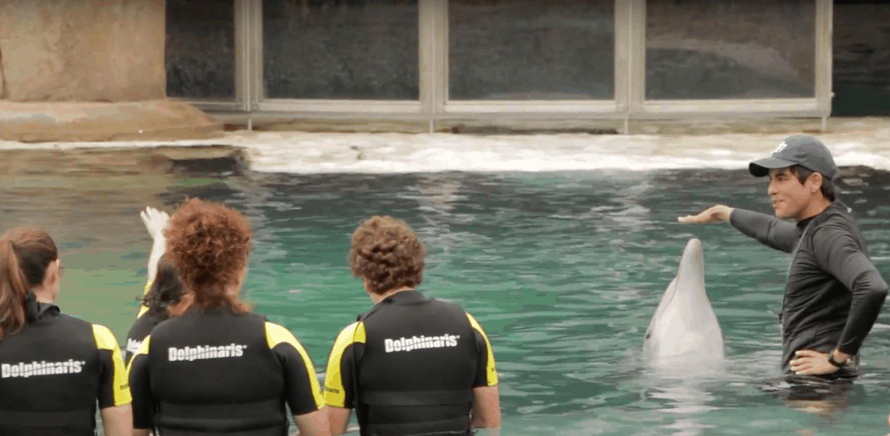 dolphinaris arizona swim with dolphins