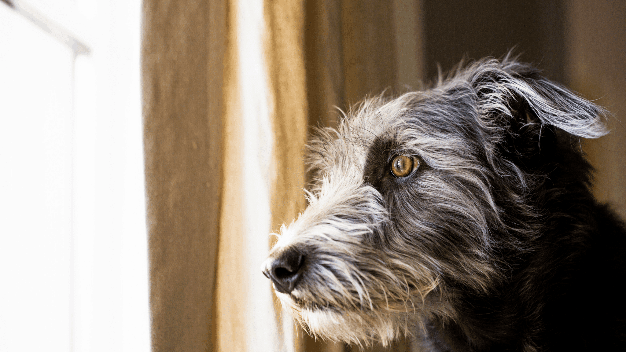 Separation Anxiety In Dogs (The Easy and Simple Guide)