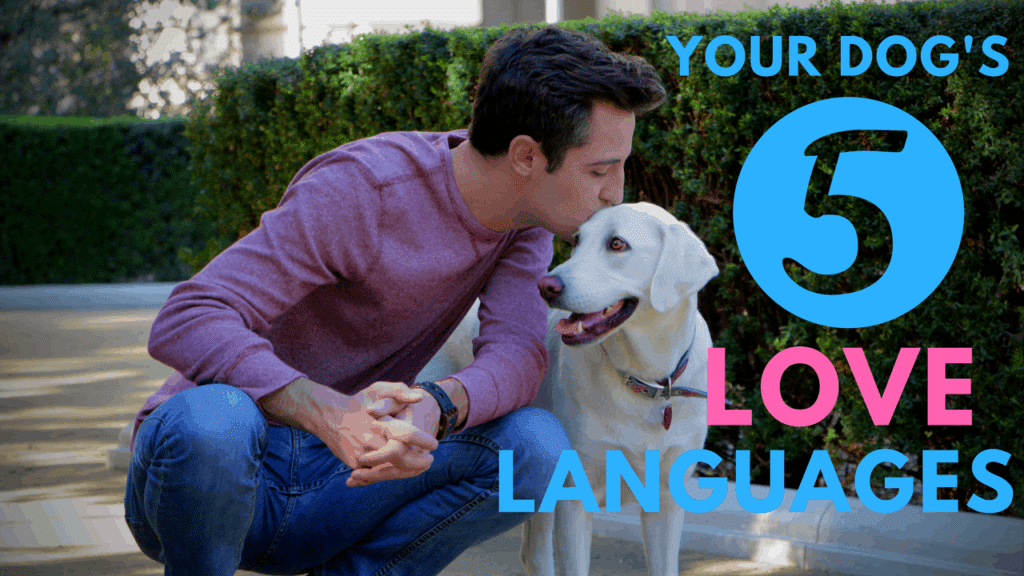 your dog's 5 love languages