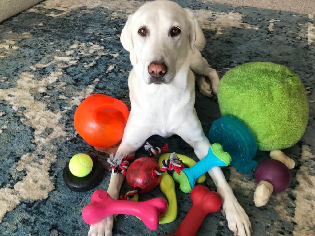 how to train your dog to like toys