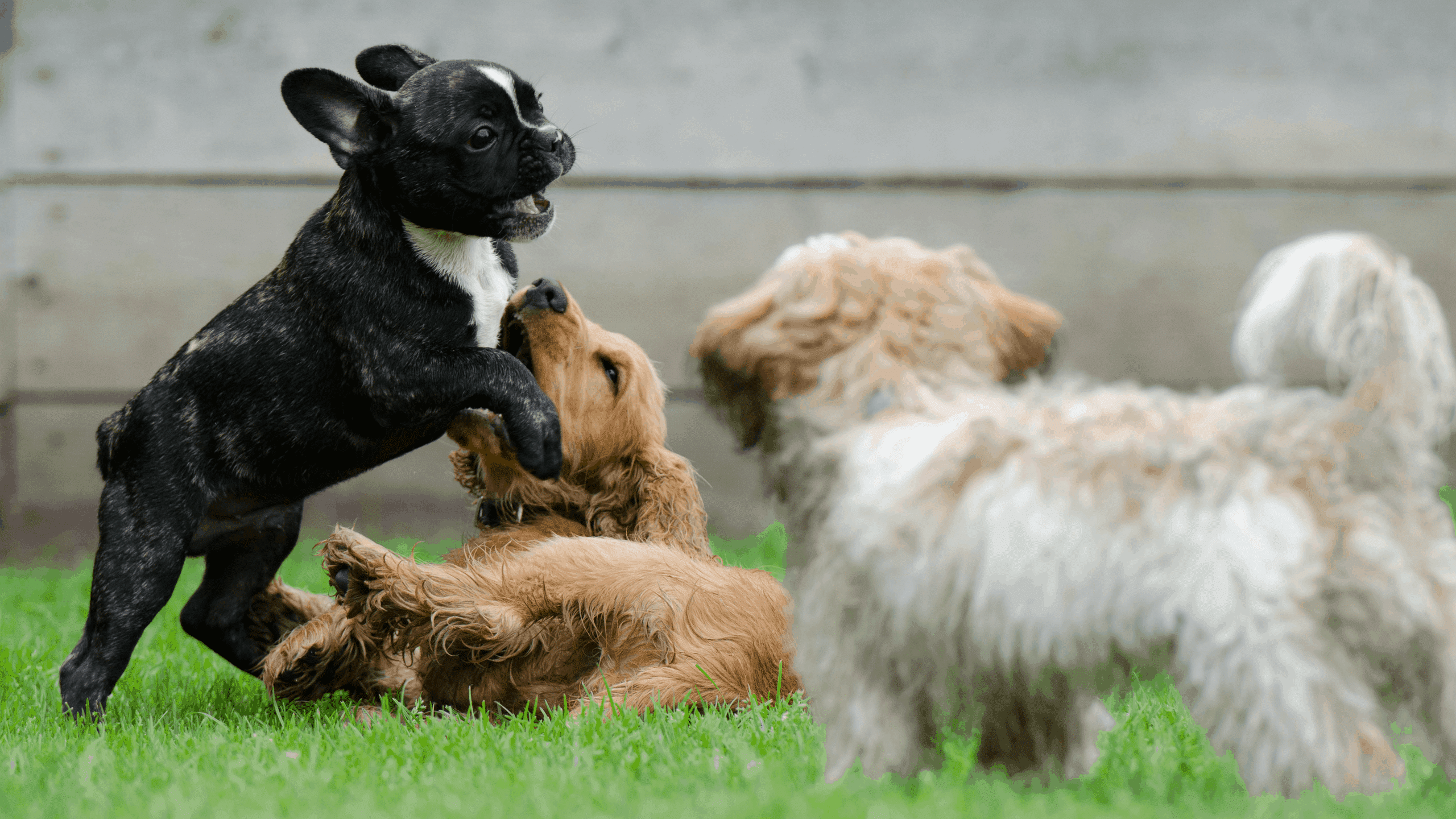 Veterinarians, You're Making The Job of Dog Trainers Really Hard!