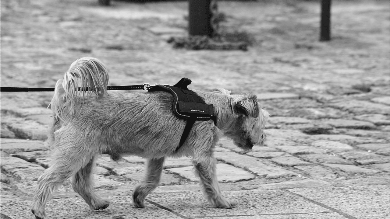 dog leash training tips